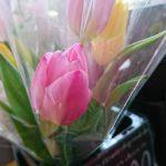 3月30日(木)はまテラスマルシェ出店者のご紹介です